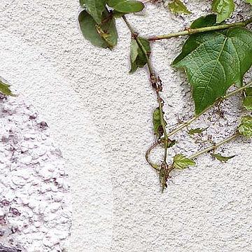 Поради щодо фарбування фасадів, пошкоджених плющем
