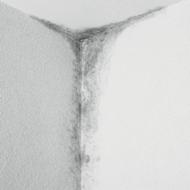Плесень в доме: как защитить стены и потолки помещений от плесневых грибов - Краски Alpina